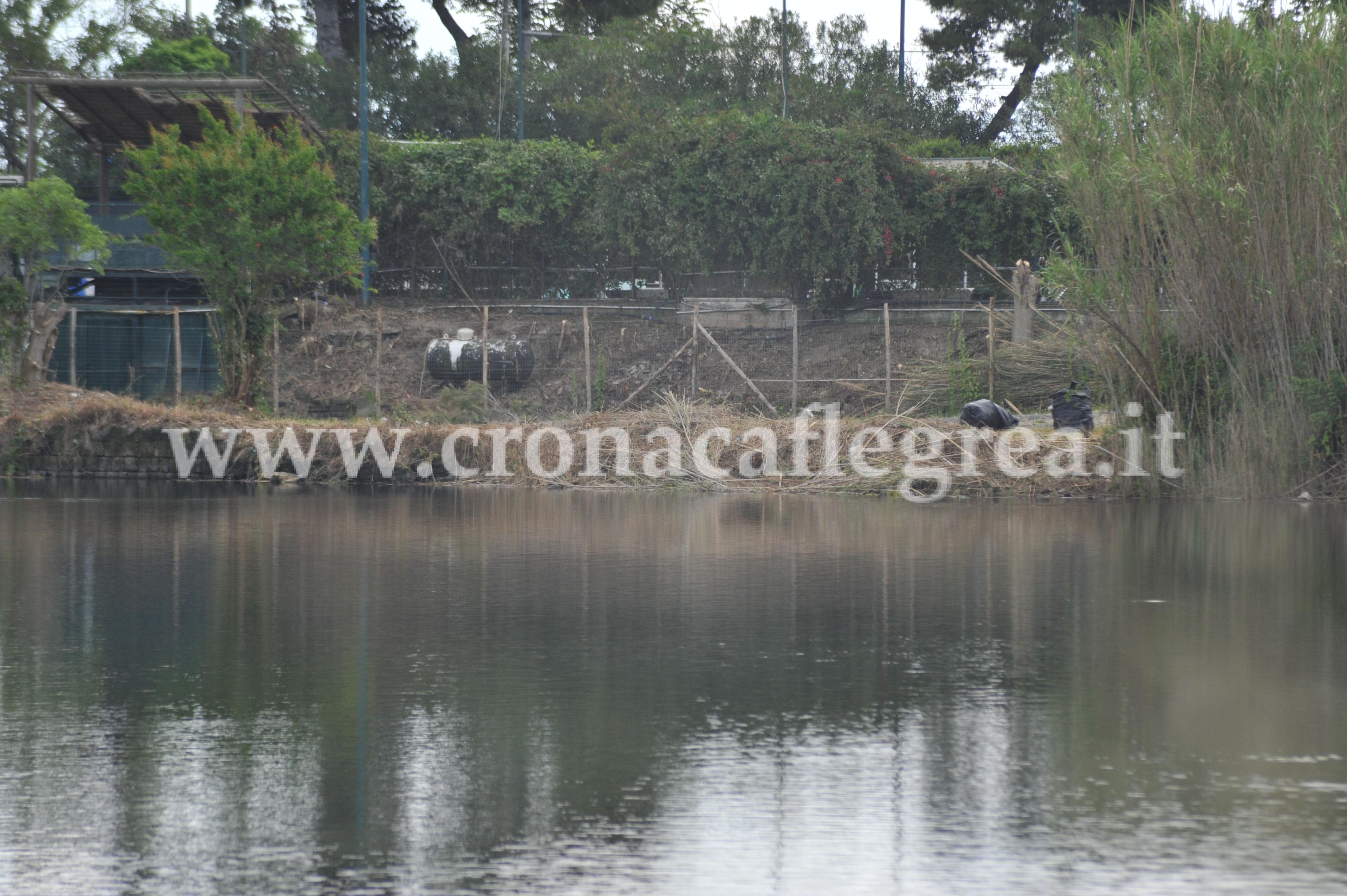 Pozzuoli scompare canneto scempio misterioso sul lago for Lago lucrino