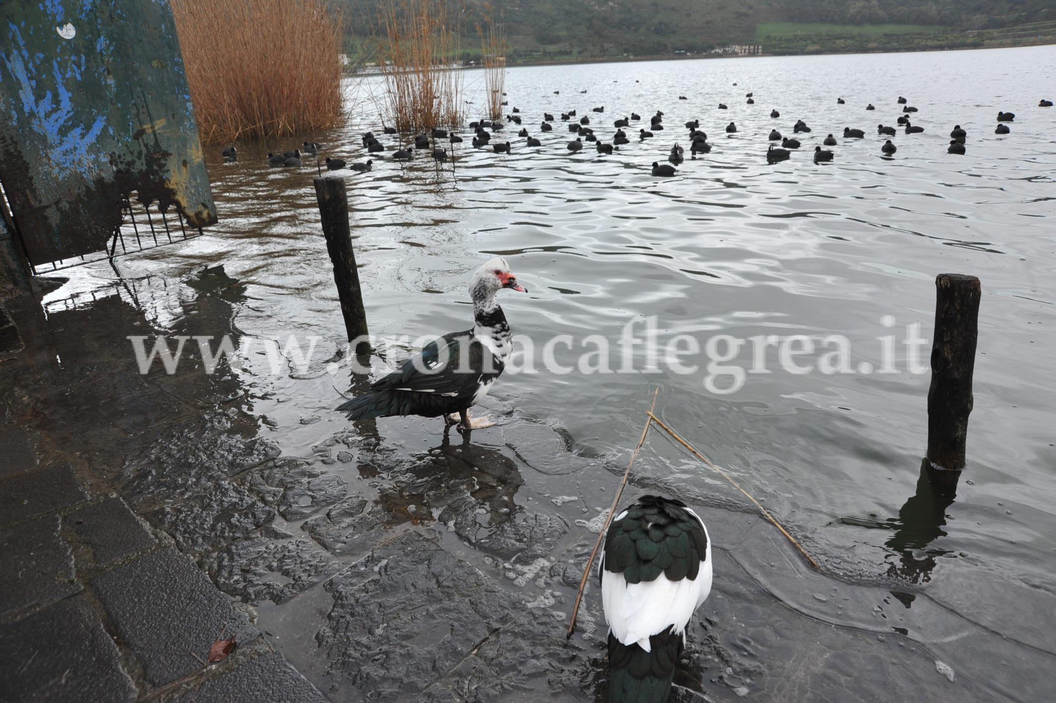 Lago d'averno in piena (2)