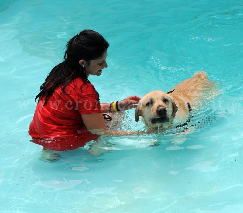 Bacoli Ecco Aquadog La Prima Piscina Per Cani Della