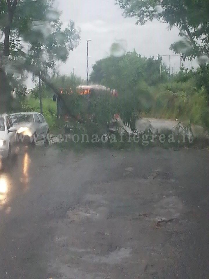 L'albero caduto a Monterusciello