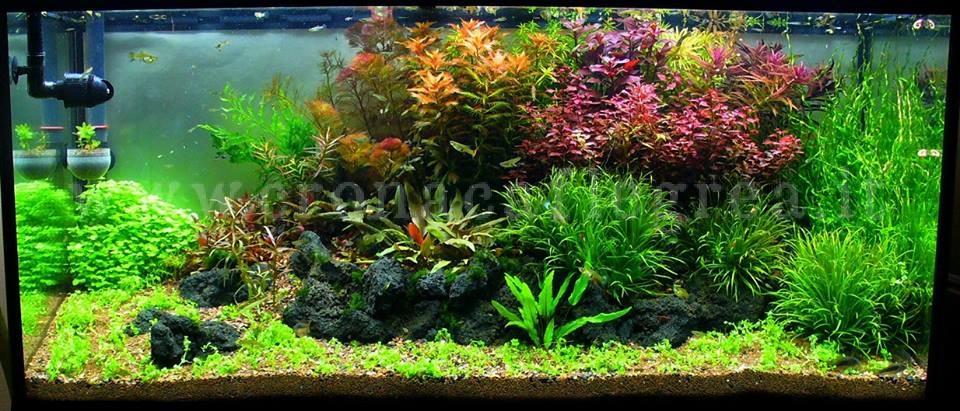 Amici animali gli acquari un vero ecosistema in casa for Acquario in casa