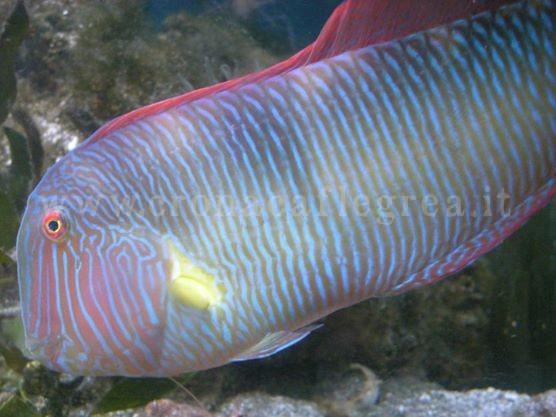 Amici animali gli acquari un vero ecosistema in casa for Un pesce allevato in acque stagnanti