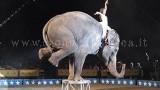 """Un elefante durante uno """"spettacolo"""""""