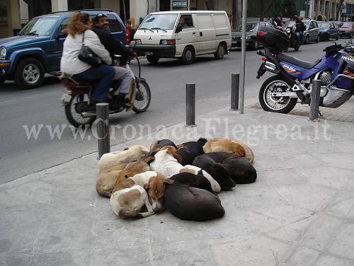 I cani di Atene Fonte: facebook