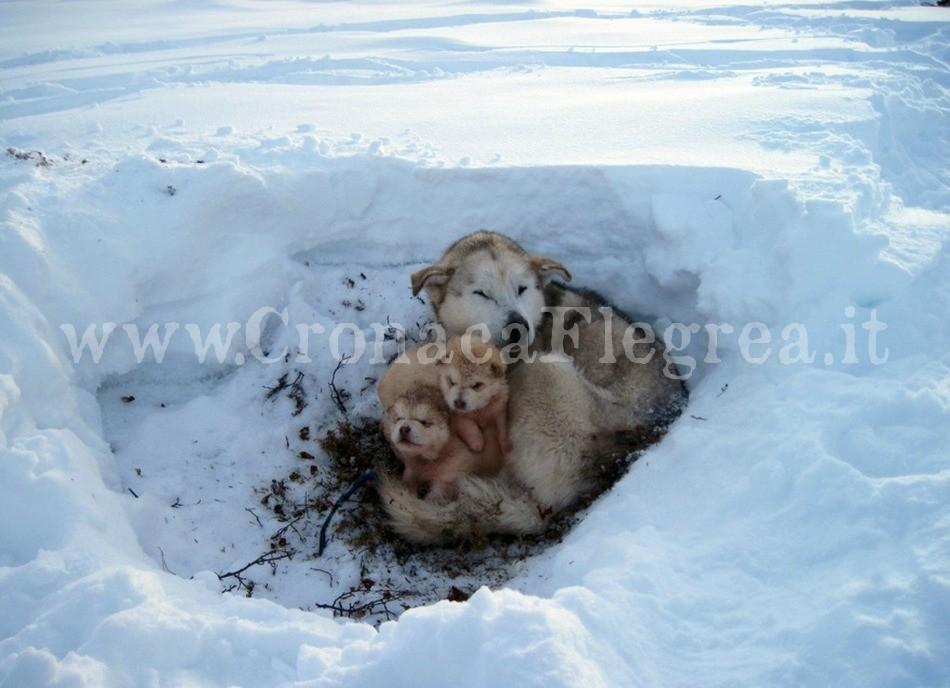 """""""Per noi solo uno scatto. Per loro una vita di sofferenze"""" Fonte: www.esdaw-eu.eu/the-stray-dogs-in-europe.html"""