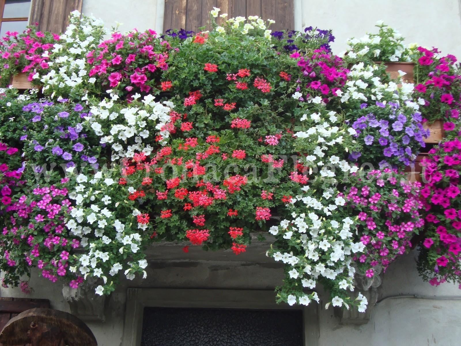 Bacoli in fiore la proposta del sindaco ai residenti for Piccoli giardini fioriti