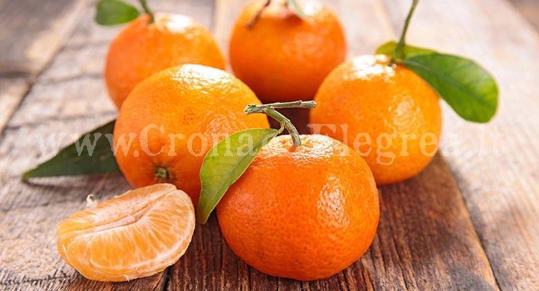 festa-del-mandarino