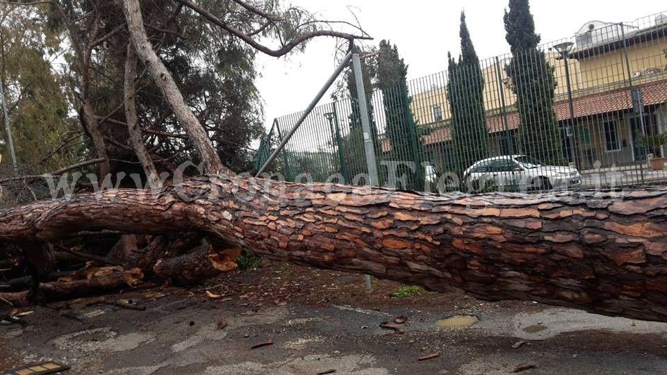 albero-licola-borgo-2