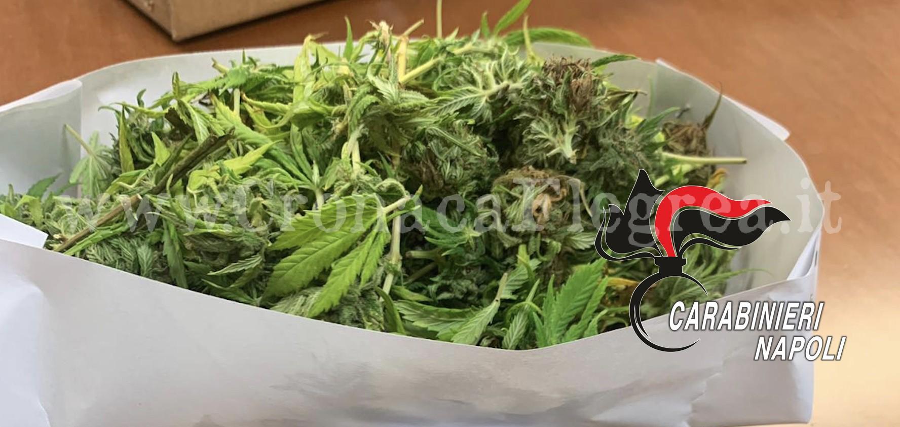 BACOLI/ Marijuana nascosta tra i biscotti: 22enne arrestato dai carabinieri - Cronaca Flegrea